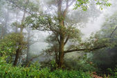 Tree in the mist. — Stock Photo