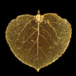 Golden Leaf — Stock Photo