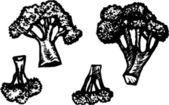 Illustrazione di xilografia di broccoli — Vettoriale Stock