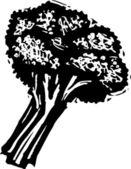 Woodcut illustration of Broccoli — Stock Vector