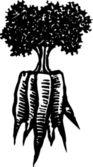 ксилография иллюстрация кучу морковь — Cтоковый вектор