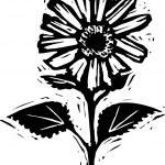 Woodcut illustration of Flower — Stock Vector #29559485