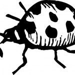 Woodcut Illustration of Ladybug — Stock Vector
