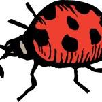 Woodcut Illustration of Ladybug — Stock Vector #29563473
