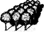 Drzeworyt ilustracja gaju drzew owocowych lub pomarańczowe drzewa — Wektor stockowy