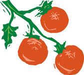 Gravür illüstrasyon asma üzerinde domates — Stok Vektör