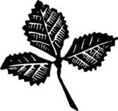Woodcut illustration of Leaf — Stock Vector