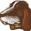 Woodcut Illustration of Basset Hound Dog Face — 图库矢量图片