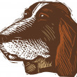 Woodcut Illustration of Basset Hound Dog Face — Stok Vektör
