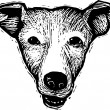 Woodcut Illustration of Basengi Dog Face — Stockvektor