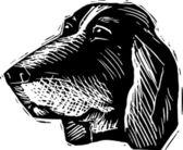 Drzeworyt ilustracja twarz psa basset hound — Wektor stockowy