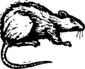 Vector Illustration of Rat — Stock Vector