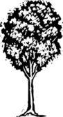 Träsnitt illustration av träd — Stockvektor
