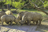 Grupp noshörningar — Stockfoto