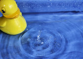 Splash Rubber Duck — Stock Photo