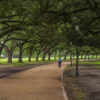 Stock Photo: Oak Trees Shade Walkway