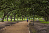 Oak Trees Shade Walkway — Stock Photo