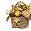 Fall Harvest Basket Isolated — Stock Photo