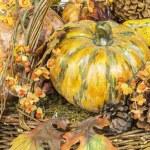 Fall Harvest Pumpkin Scene — Stock Photo #36353123