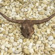 Rusty Brown Longhorn Cow Skull — Stock Photo