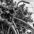 Black and White Vintage Bicycle — Stock Photo