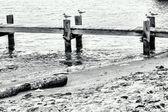 Molo della spiaggia — Foto Stock