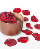 Rose and petals in cup — Stock Photo