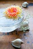 Chrysanthemums in water — Stock Photo