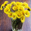 Spring yellow flowers — Stock fotografie