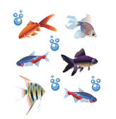 Zes afzonderlijke vissen — Stockvector