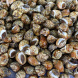 Shellfish for sale — Stock Photo