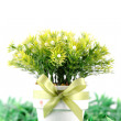 Flower pot with green grass isolated — Stock Photo