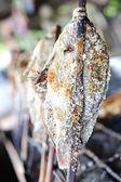 Fish were burned — Stock Photo