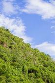 Lummig skog mot himlen — ストック写真