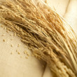 Wheat lay on linen — Stock Photo