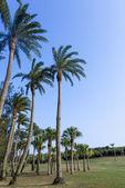Groene grasland, eluanbi park, eerste, pin-don, taiwan — Stockfoto
