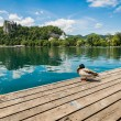 Lake Bled and duck. — Stock Photo