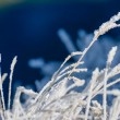 Frozen grass. — Stock Photo