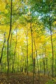 Trees in park. — Stock Photo
