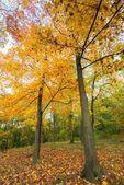 Autumn park. — Stock Photo