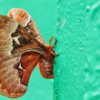 Close up view of butterfly. — Stock Photo #36184909