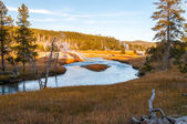 Meadows of the Lewis River valley, Yellowstone NP. — Stock Photo