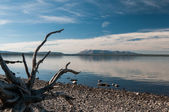 Yellowstone Lake. — Stock Photo