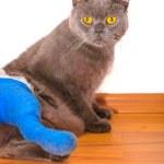 Cat with broken leg — Stock Photo #30043009