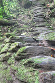 Indigenous stone stairs to Ciudad Perdida archeological site — Stock Photo
