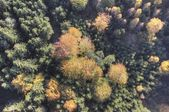 Aerial view of autumn forest — Foto Stock