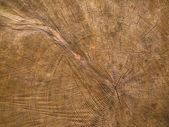Background: End grain, cut log — Stock Photo