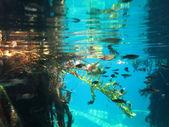 Underwater view of a cenote near Playa del Carmen, Mexico. — Stock Photo