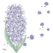 Hyacinth background — Stock Photo