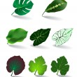 Stock Vector: Leaves set